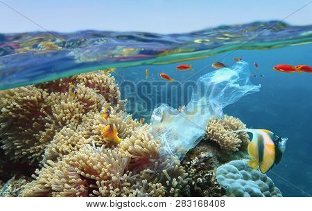 The World Ocean Pollution. Beautiful Tropical Coral Reef With Sea Anemones, Clownfish And Colorful C
