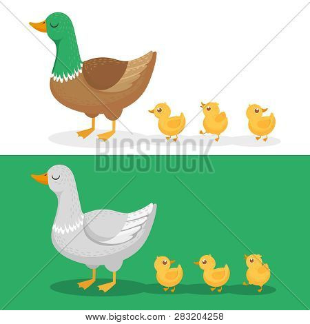 Ducklings And Mother Duck. Ducks Family, Duckling Following Mom And Walking Mallard Baby Chicks Grou