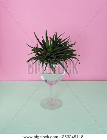 Cactus Fashion Design. Minimal Fashion Stillife. Trendy Bright Colors. Green Cactus In A Glass On A