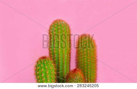 Cactus Fashion Design. Minimal Fashion Still Life. Trendy Bright Colors. Green Cactus On Pink Backgr