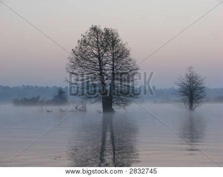 Reflection Of Trees On Lake At Dawn