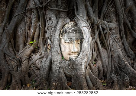 Buddha Head Embedded In A Banyan Tree At Wat Phra Mahatat, Ayutthaya, Thailand, Asia
