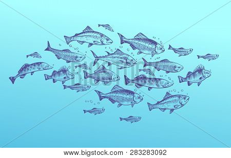Fish School. Fishes Group Hand Drawn Sketch. Restaurant Delicacy Seafood Menu Dorado Mackerel Tuna F