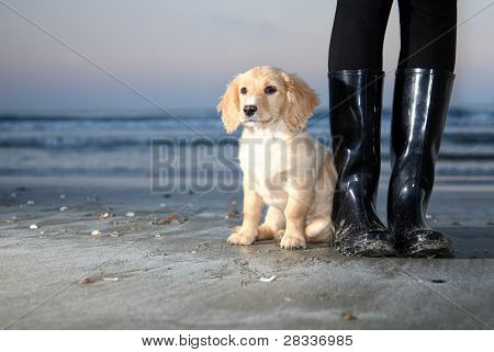 puppy seating next to boots on a beach poster