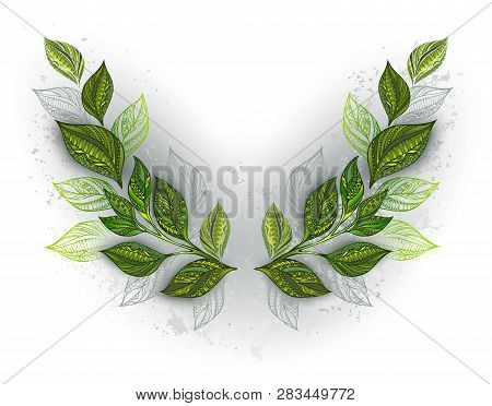 Symmetric Pattern Of Patterned Green And Gray Tea Leaves On White Background. Tea Design.