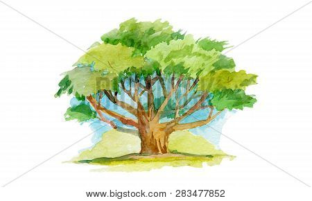 Watercolor Illuctration. Tree With Many Branches. Adult Green Tree With A Spreading Crown