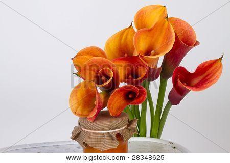 Orange Calla Lilies (zantedeschia) With Orange Marmalade