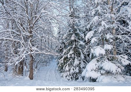 A Snowy Road Going Through The Forest In The Winter In Finland. White Snow Covering The Trees And A