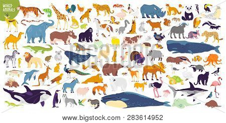 Big Vector Set Of Different World Wild Animals, Mammals, Fish, Reptiles And Birds. Rare Animals. Fun
