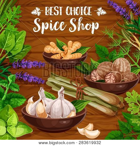 Cooking Spices, Culinary Seasonings And Herbs. Vector Organic Natural Herbal Flavorings Garlic, Ging