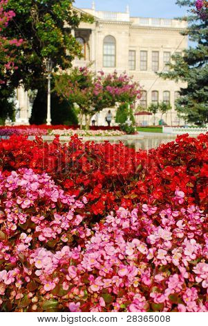 Some Flowers With Sultan Palace In Back Ground