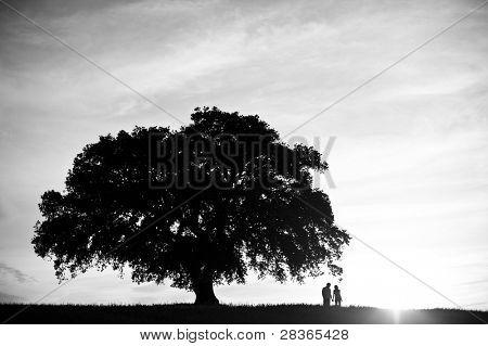 Monochrome image of a couple under a oak tree
