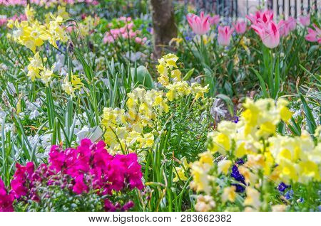 Colorful Flowers In Blossom