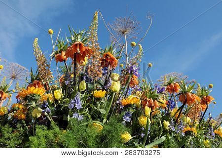Floristic Decoration With Tropical Flowers Against A Blue Sky
