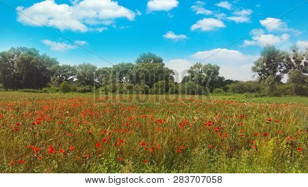 Meadow With Wild Poppies And Blue Sky With Clouds