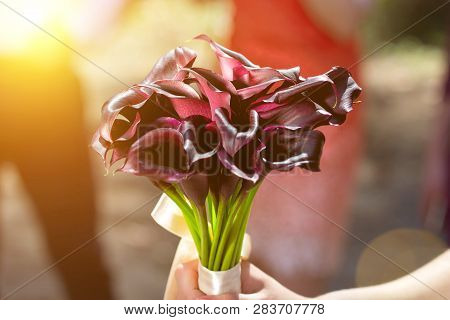 Beautiful Dark Red Daylily Blooming Bouquet In The Summer Sun