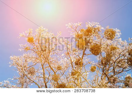 Sunset On The Background Of Winter Nature Snow Tree