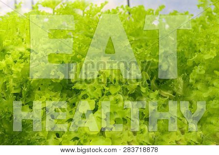 Eat Good Feel Good, Eat More Green, Eat Well Live Well, You Are What You Eat Words On Hydroponics Gr