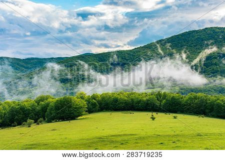 Meadow On The Hillside At Sunrise. Fog Rising Above The Forest. Mountain In The Distance. Cloudy Sky