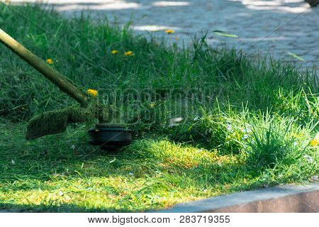 Professional Grass Mowing In The Park. Green Lawn With Yellow Dandelions. Close Up Shot Of Gasoline