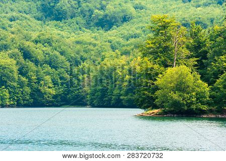 Lake Among Beech Forest. Sunny Afternoon Summer Weather. Beautiful Nature Background