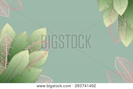 Pale Green Rectangular Background With Bright And Shiny Pink Tropical Banana Leaves. Summer Exotic L