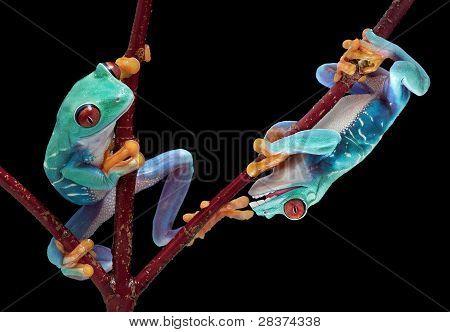 Frog Biting Friends Toe
