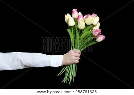 Hand In A White Shirt Sleeve Holds A Bouquet Of Tulips. Isolate On Black Background