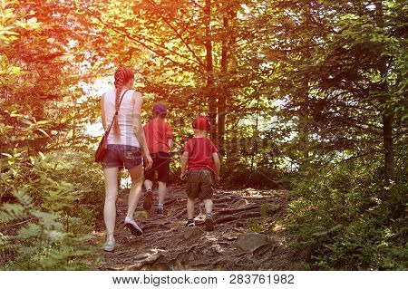Mother And Two Little Sons Are Walking In The Sunny Forest. Maternity And Friendship.
