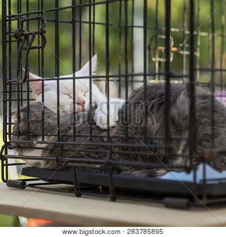 Sleeping Homeless White And Grey Adult Cats Cats From Shelter For Animals In A Cage, Expecting Them