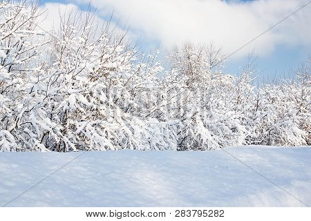 Bushes Under Snow In A Park On A Winter Day