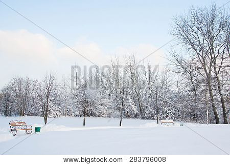 Benches And Different Trees In The Snow In Winter