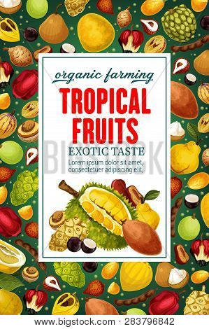 Exotic Tropical Fruits, Whole And Cut. Vector Durian And Cherimoya, Mangosteen And Quince, Litchi An