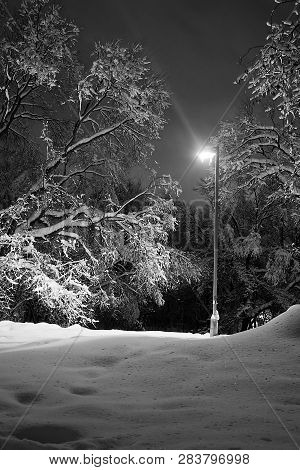 Street Lamp In A Park In The Winter Evening Black And White