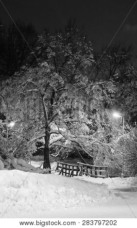 Trees Under Snow And Bridge In Winter Evening Black And White