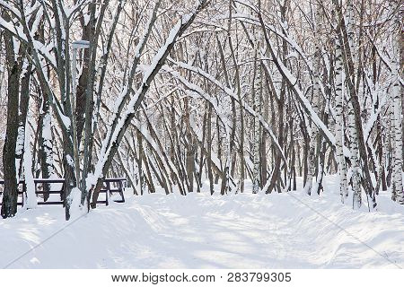 Street Lamp, Snowdrifts And Trees Under The Snow