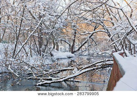 Fallen Trees In A River In Winter Park