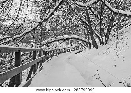 Footpath Next To A Fence In Winter Park Black And White