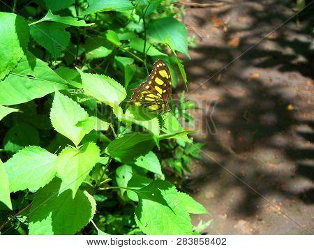 Una Bella Mariposa Posada En La Arboleda A La Orilla Del Sendero