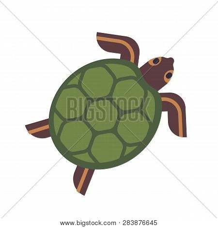 Sea Turtle, Tortoise Or Terrapin Isolated On White Background. Gorgeous Adorable Exotic Animal. Cute