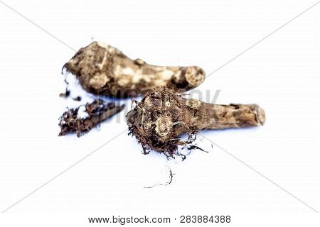 Close Up Of Rare Vegetable I.e. Roots Of Jack Fruit  Or Jackfruit Roots Isolated On White Also Known