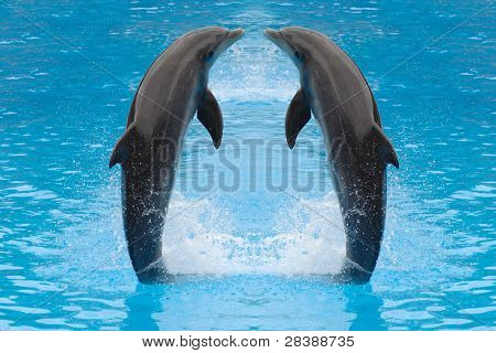 Dolphin twins are jumping in the water.