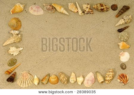 Frame with many different seashells. Place your own object or tekst in the frame.