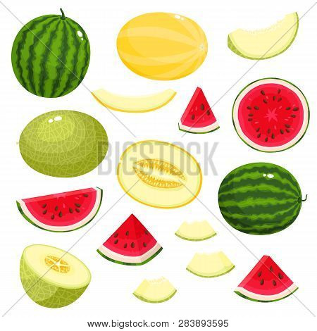 Bright Vector Set Of Fresh Melon, Watermelon Isolated On White