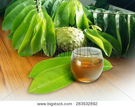 Branch Pf Soursop Leaves, Fruit And Tea