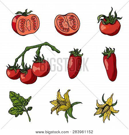 Set With Tomatoes On White Background. Tomatoes, Tomato Leaves And Flowers Isolated On White. Differ