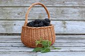 Freshly picked  blackberries  in the small basket captured in sunny evening at the old garden bench. poster