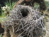 An empty bird's nest sits in a cholla cactus. poster