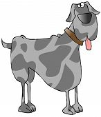 This illustration depicts a harlequin great dane dog. poster
