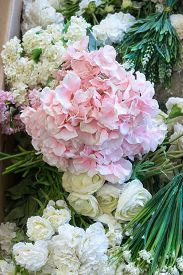 Pretty White And Pink Wedding Flowers Including Roses And Hydrangea With Foliage In Preparation For